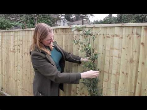 Climbing Rose Trellis Ideas Gardening Tips Supporting Climbers Youtube