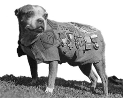 Sergeant Stubby Memorial Dogs Incity Times