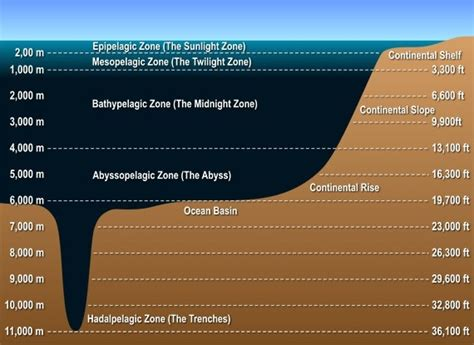growth rarely happens inside your why does the temperature of the ocean decrease as we go