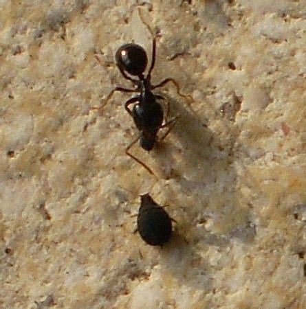 Rote Ameisen Im Rasen 4019 by Rasen Schadbilder