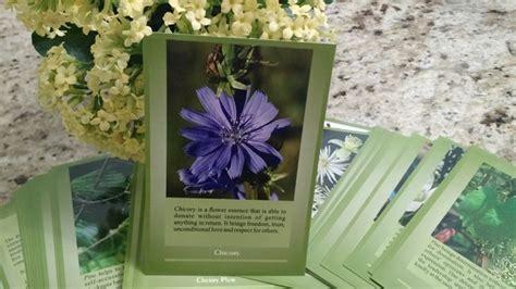 test dei fiori di bach fiori di bach test fiori di bach cos 232 il test dei