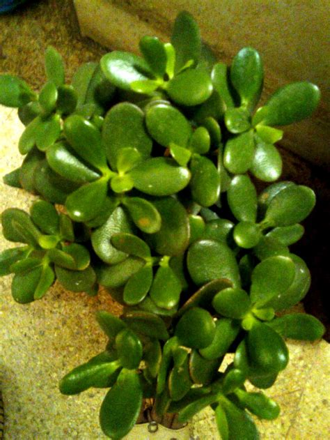 easy plants ten easy to grow indoor plants that can brighten up your