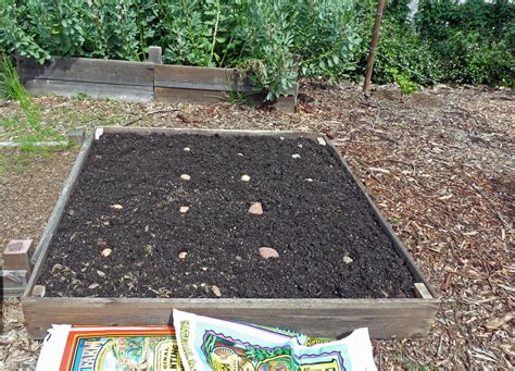 growing potatoes from dirt to dinner