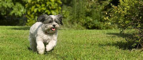 how to keep dog in yard 100 how to keep dog in yard how to keep dogs u0026