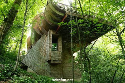 coolest treehouse in the world coolest tree house ever portland xcitefun net