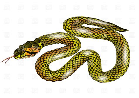 clip snake snake isolated on white background vector image 27499