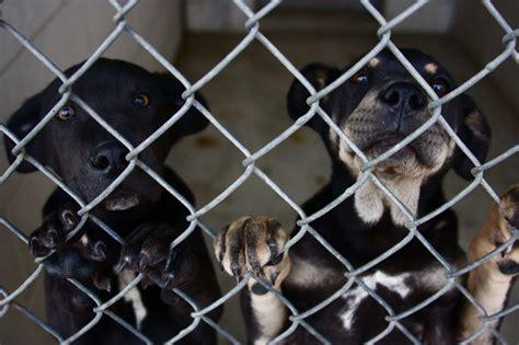 muncie s animal shelter in danger of closing news 201