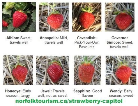 Different Types Of Strawberries With Pictures