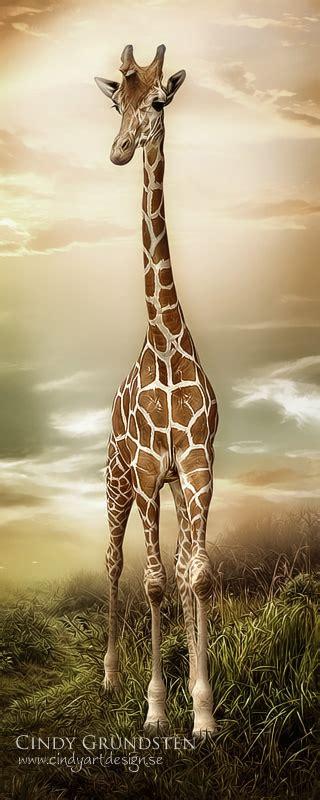 jirafas imagenes lindas jirafa 184 168 ڿڰ animales y mascotas quot 176 ڿ