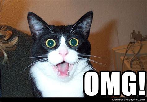 Omg Cat Meme - the omg moment series vol 1