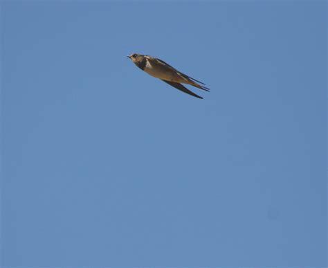 streamlined birds