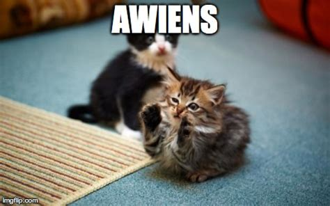 Cute Kittens Memes - image tagged in memes cats cute kittens animals imgflip