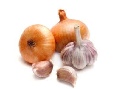is garlic poisonous to dogs human food poisons to dogs