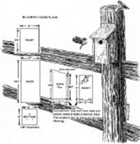 what direction should bluebird house face bluebird house plans build a bluebird house