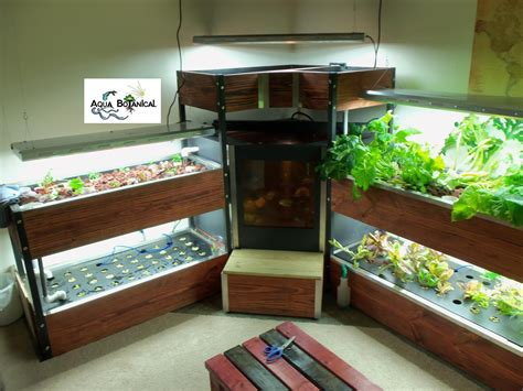 indoor aquaponics  aqua botanical aquaponics