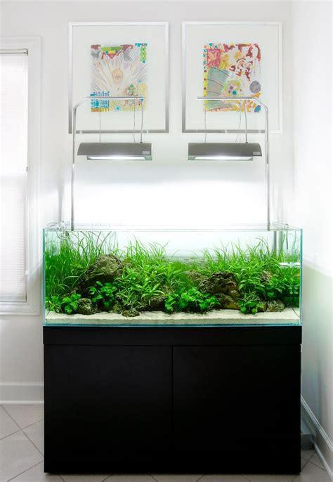 aquarium design jobs 17 best images about planted dirted aquariums on