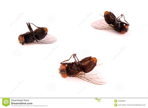 dead flies stock photography image