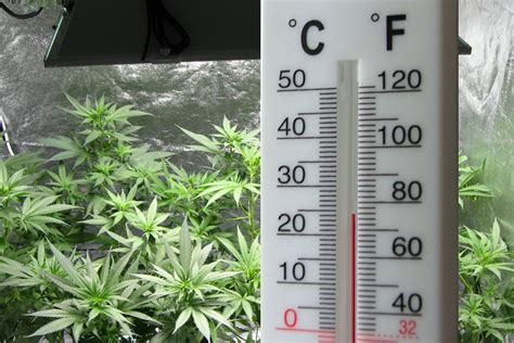 how to lower humidity in a grow room optimal grow room humidity at every stage of your cannabis grow marijuana news and updates