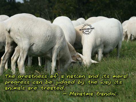 Animal Quotes Quotes About Wildlife Quotesgram