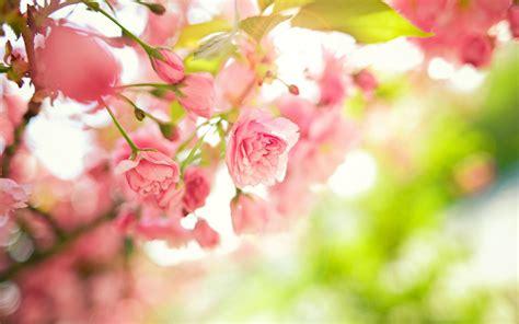 imagenes de flores wallpaper hd t 246 k 233 letes vas 225 rnapi szerelmes 250 traval 243