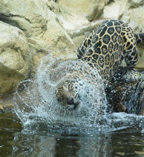 jaguar bathtubs jaguar bath fotograf 237 a pinterest fotograf 237 a