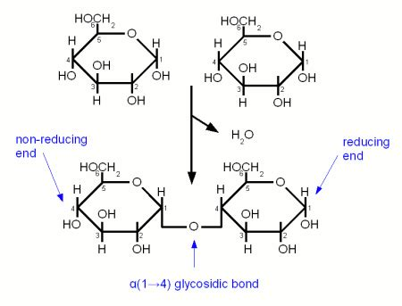 carbohydrates bonds together revising as biology f212 carbohydrates