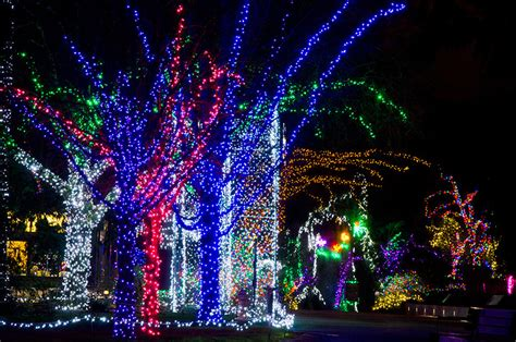 zoo lights 2017 seattle a few fantastic events in roosevelt seattle wa for