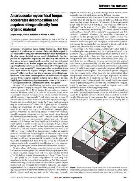 an arbuscular mycorrhizal fungus accelerates decomposition
