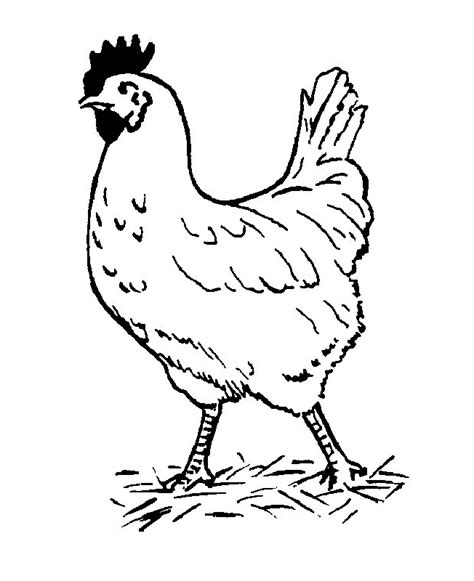chicken coloring page free printable chicken color pages az coloring pages