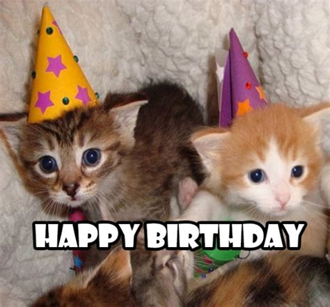 Happy Kitten Meme - happy birthday wishes with cat page 8