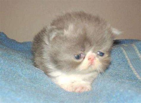 imagenes tiernas gatitos bebes gatitos hermosos y tiernos beb 233 s imagui