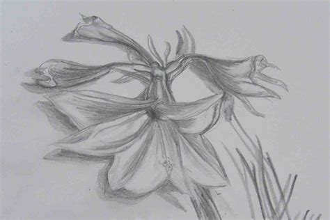 Drawing N Sketches by The Images Collection Of Richard Creative Drawings Of