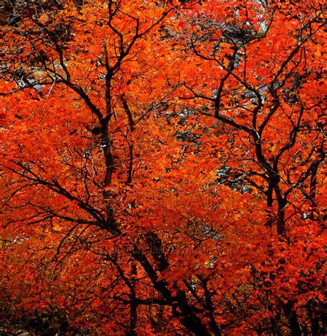 orange tree fall colors square by houstonryan on deviantart