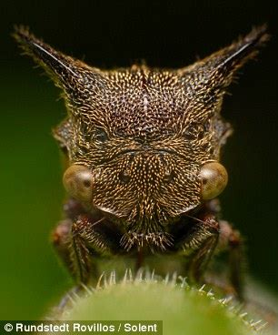the x flies:up close, the garden bugs who look like aliens