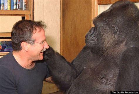 Azka Koko Daily 02 what happens when koko the gorilla meets actor robin williams