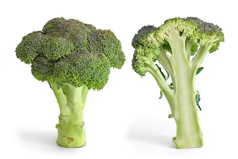 h pylori vegetables broccoli for h pylori infections the luxury spot