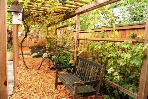 backyard grape trellis 21 best patio grape arbor decor ideas