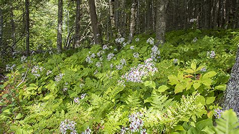wildlife and plant the boreal forest