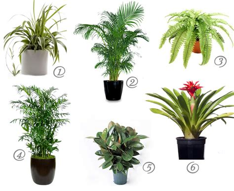 Indoor Plants For Cats | cat safe house plants for cleaner air mind over matter