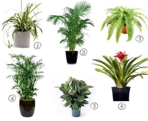 good houseplants cat safe house plants for cleaner air mind over matter
