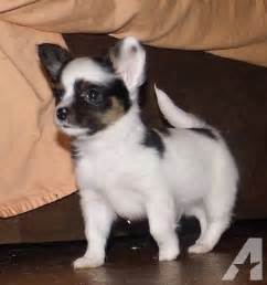Small Dogs Needing A Home Small Breed Dogs Need A Home For Sale In Suamico