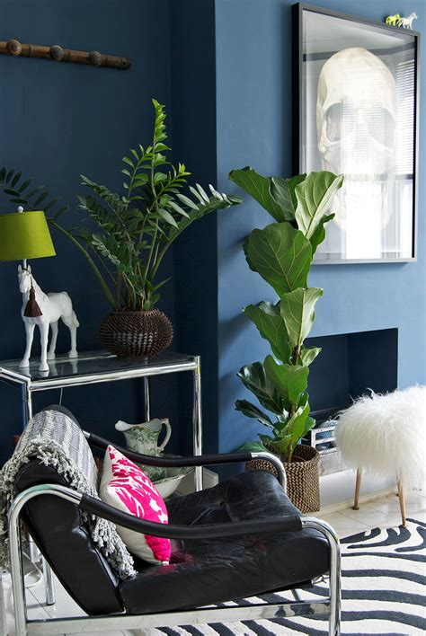 good houseplants for dark rooms living room moodboard coming back from the dark side f