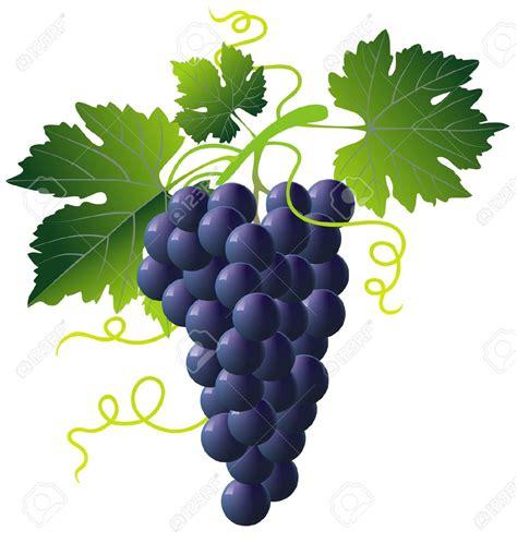 imagenes uvas fin de año un grappolo d uva la tua bocca