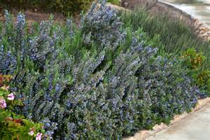 Types Of Garden Herbs - protect against radiation with herbs foods and sea