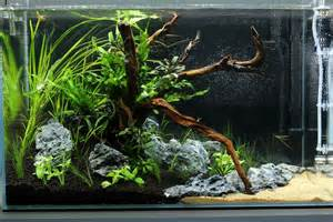 How To Make An Aquascape Aquascape Ada Cube Garden 60p A Little Piece Of Mekong