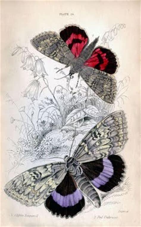 instant art printable colorful butterflies moths
