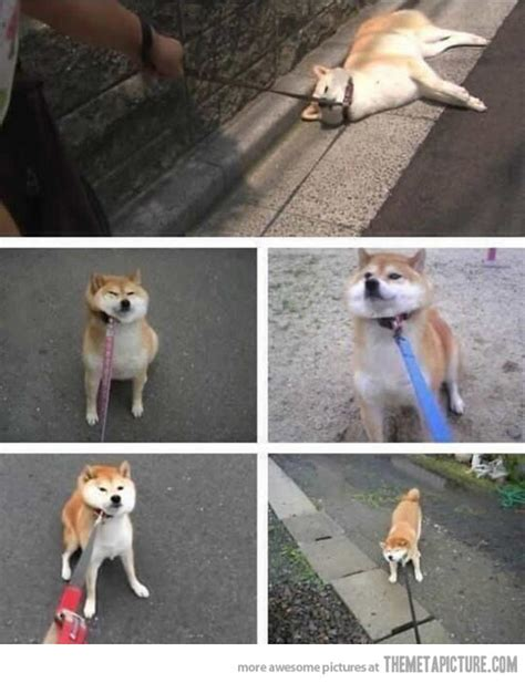 puppy refuses to walk refuses to go for a walk the meta picture