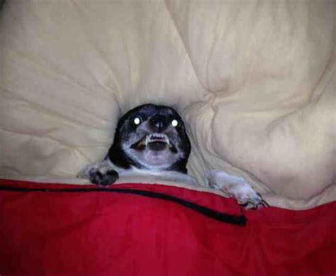 tucked in bed grrrr let me sleep