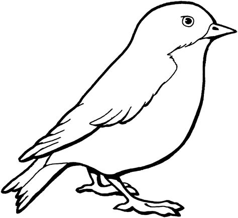 sparrow colouring pages  toddlers