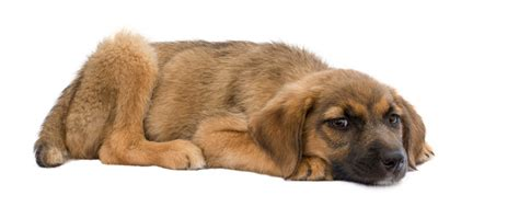 puppy with diarrhea how to cope with puppy diarrhea